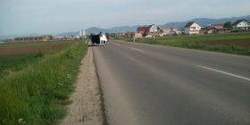 Aksident i rëndë trafiku në Pestovë (FOTO)