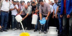 Qumështarët protestojnë sot në shenjë pakënaqësie me gjendjen në këtë sektor