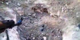 Si e varrosën të gjallë Mitrush Kutelin në Kënetën e Maliqit