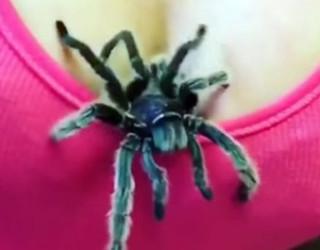 Kur nga dekolteja del një… merimangë (Video)