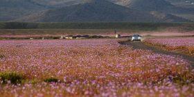 Në shkretëtirë bie shi: Shihni çfarë ndodh më pas (Foto)