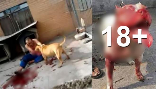 13 sulme të tmerrshme të qeneve të kapura nga kamerat në kohë reale (VIDEO 18+)