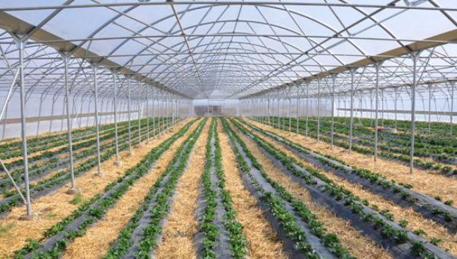 Publikohet lista e përfituesve të granteve në bujqësi në sektorin e përpunimit