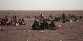 ISIS-i ka marrë 550 familje irakiane si mburojë të gjallë