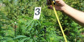 Zbulohet një laborator droge në Shqipëri