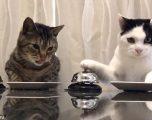 Eksperiment: Ja si e porosisin ushqimin macet (Video)