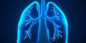 Zbulimi i ri: Mushkëritë nuk janë vetëm për frymëmarje, ato prodhojnë gjak