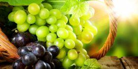 Historia dhe përfitimet shëndetësore të rrushit