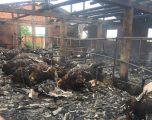 Digjen për së gjalli 28 lopë në Babush të Lipjanit
