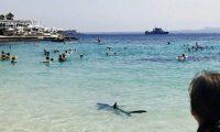 Peshkaqeni shfaqet në plazh, tmerron pushuesit