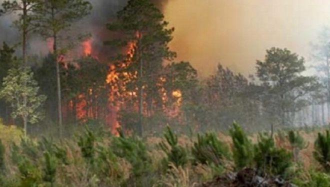 Ndizet zjarri në Batllavë