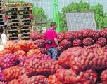 Patatet e Kosovës në tregun e Shqipërisë (VIDEO)