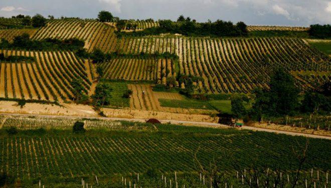 Thatësira dëmton kulturat bujqësore