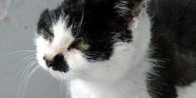 Macja përshëndet pronarin në mënyrë të veçantë (Video)
