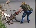 Qeni i saj në luftë të përgjakshme me një qen tjetër, pronarja nuk mundi të bënte asgjë (Video)
