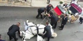 Po tërhiqte karrocën ku gjendej nusja dhe dhëndri, kali i rraskapitur shtrihet në mes të rrugës (Video)