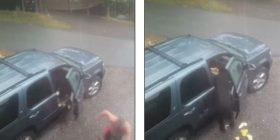 Ndodh edhe kjo: Arinjtë ngecin brenda veturës, pronari i saj ua hap derën që të dalin (Video)