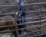 Kamerat e sigurisë filmojnë të riun duke bërë seks me kali, e braktis e dashura kur pa pamjet rrëqethëse (Foto/Video)