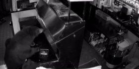 Pronari në gjumë, arinjtë u futen në një piceri dhe hëngrën 30 kilogramë ushqim nga frigoriferi (Video)