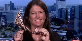 """""""Hirushja vërtetë ekziston"""": Kërkon këpucën që e humbi , i bën apel të gjithëve live në televizion që t'ia kthejnë nëse e kanë gjetur (Foto/Video)"""