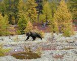 Pas 150 vjetëve shfaqet ariu në një park natyror në Spanjë