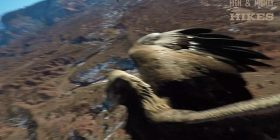 Shqiponja sulmon dhe rrëzon dronin (Video)