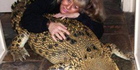 Njihuni me gruan që bashkëjeton me 5 krokodilë dhe i ndanë të gjitha me ata (Foto/Video)