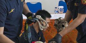 Dogana konfiskon 25 kafka njerëzish të nisura nga Indonezia për në Holandë (Foto)