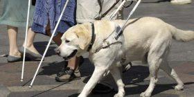 I verbri që ka fobi qentë, udhëzohet nga një kalë poni (Foto)