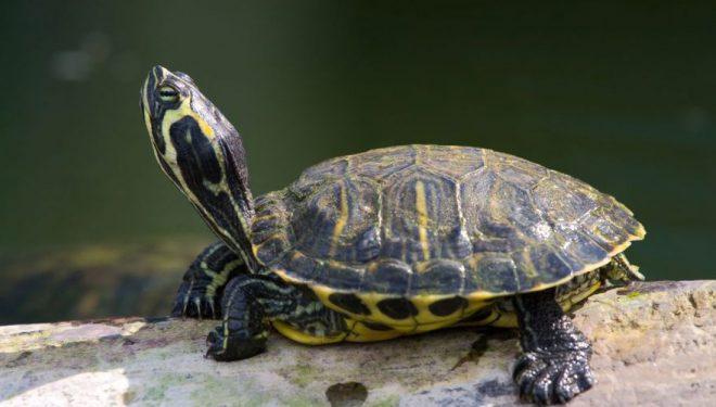 Breshka i shpëton më të keqes, elefantët i kalojnë vetëm disa centimetra – nuk e shtypin (Video)