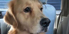 I humb qeni, ofron shtëpi për këdo që e gjen
