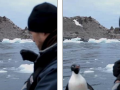 Pinguini kërcen në barkë për t'i shpëtuar dhëmbëve të mprehtë të fokës (Video)