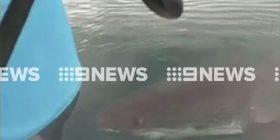 """Babai me fëmijë u frikësuan nga peshkaqeni që bënte xhiro rreth tyre, para se t'ju """"kafshonte"""" barkën (Video)"""