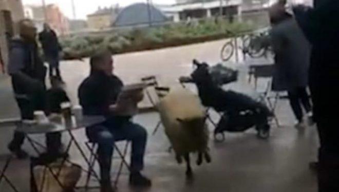 Delja iku nga kopshti dhe hyri në qendër tregtare, fëmijët mendonin se është lodër (Video)