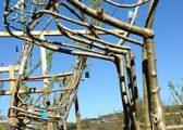 Krijon karrige nga degët drunjve, kushtojnë mbi 10 mijë euro (Foto)