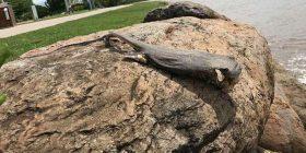 Krijesa misterioze që kaloi nëpër plazh, befasoi të gjithë me formën e pazakontë (Foto)