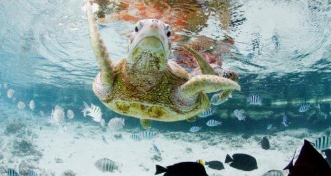 Breshkat 'zbarkuan' në tokë para dinozaurëve