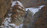 Ekspertë të kamuflimit, a mund t'i gjeni leopardët e rrallë të borës në kodrën shkëmbore? (Foto)