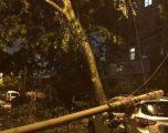 Pas vërshimeve, shirave të rrëmbyeshëm dhe erërave të forta, qyteti kinez mbushet me oktapodë e yje të detit (Foto/Video)
