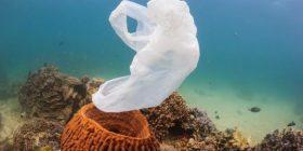 Në të ardhmen në dete do të ketë më shumë plastikë se peshq