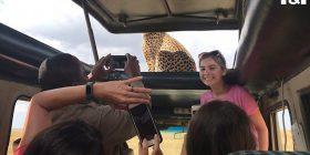 Getoparti qëndroi në tavanin e hapur të makinës së turistëve, ata nuk hezituan të bëjnë 'selfie' (Video)