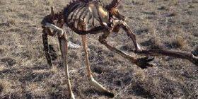 Mbetjet e kangurit që ngordhi në këmbë, tregojnë thatësinë marramendëse që ka goditur Australinë (Foto)