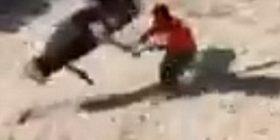Mirëmbajtësin e pakujdesshëm të kopshtit zoologjik, e sulmoi keq një struc (Video)