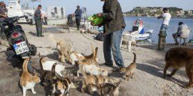 Pagë të majme dhe banim falas për atë që dëshiron të kujdeset për 55 macet e një ishulli grek (Foto)