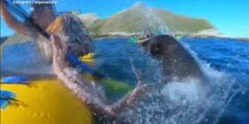 Ekspertët tregojnë arsyen pse foka e goditi lundruesin me oktapod (Video)