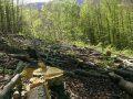 Vazhdon degradimi i pyjeve, pritet ligji për mbrojtjen e tyre