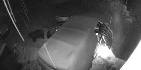 Zgjohen në mëngjes dhe gjejnë dyert e veturës të hapura, shikojnë pamjet e kamerave të sigurisë për të zbuluar të vërtetën – ariu kërkonte ushqim (Video)