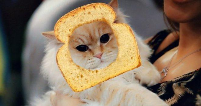 Lentet e Snapchat tani funksionojnë edhe me macet