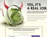 Legalizimi i kanabisit, po kërkohen punëtorë të rinj – kompania kanadeze ofron 50 dollarë për orë (Foto)