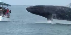 Balena që kërceu papritmas, lagu vizitorët që ndodheshin në barkë (Video)